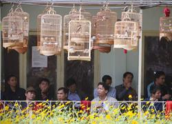 Người Hà Nội với thú chơi chim