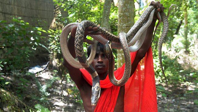 549380-india-religion-hinduism-snake-137