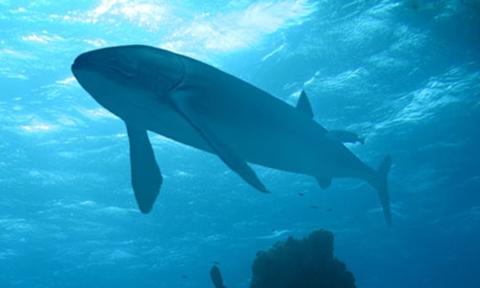 fish-1377600340.jpg