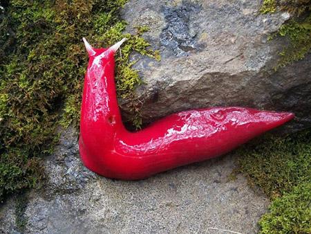 mt-kaputar-pink-slugs-2-6-6723-137938291