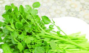 'Cải xoong - có thể ăn thoải mái không lo thuốc trừ sâu'