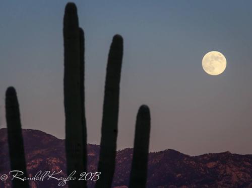 Mặt trăng trên những cây xương rồng trăm tuổi tại dãy núi Santa Catalina, Nam Ariona (Mỹ)