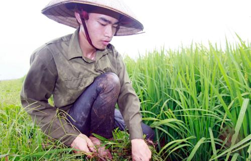 Vũ Văn Sinh vừa học, vừa tất bật việc đồng áng, lại phải chăm mẹ ốm nhưng vẫn đỗ đại học Nông nghiệp Hà Nội. Ảnh: Tiến Thắng (TT).