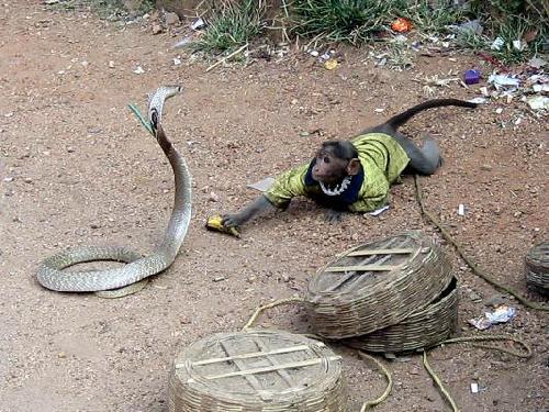 snake-and-monkey-7515-1383213023.jpg
