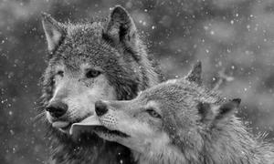 Cách yêu thương của động vật