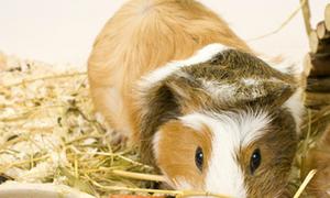Những loài động vật dễ bị nhầm lẫn