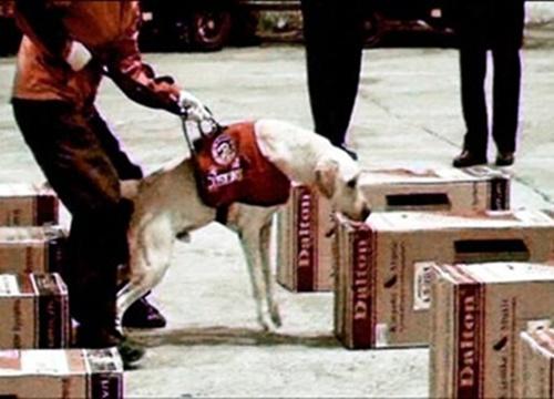 Sau khi mở kiện hàng, cử chó nghiệp vụ kiểm tra, các nhà điều tra phát hiện 600 bánh heroin, nặng tổng cộng 229 kg, được giấu trong 12 dàn loa.