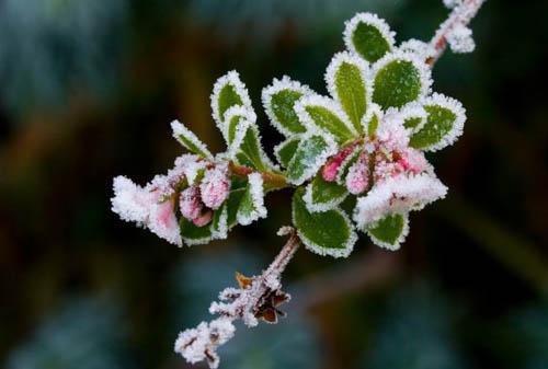 winter-flower-shutterstock-118-8887-1180