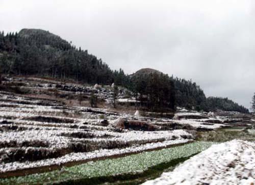 Tuyết rơi trắng từng nương ngô và trên sườn núi.