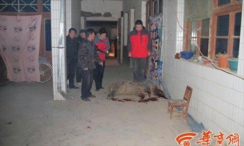 Con lợn lòi bị cảnh sát bắn chết. Ảnh: