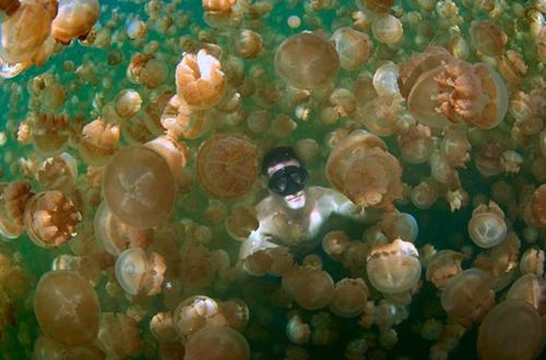 Jellyfish-Lake-Palau-04-jpg-16-6436-6367