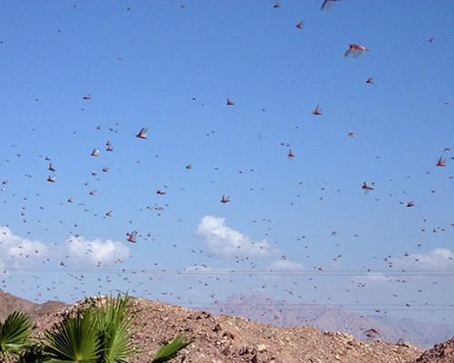 locusts-0.jpg
