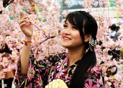 Hoa anh đào Nhật Bản khoe sắc giữa thủ đô