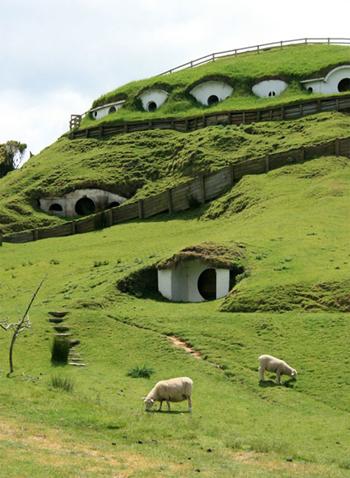 sheep-grass-1396369245-6049-1396669157.j
