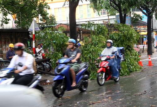 Đường Nguyễn Thái Bình (Tân Bình) hàng loạt cây xanh tét nhánh rơi xuống đường. Ảnh: An Nhơn