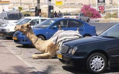 Đậu xe đúng nơi quy định.