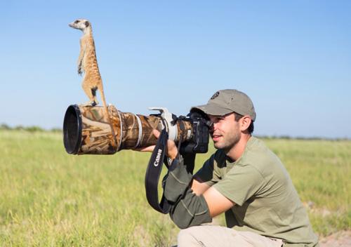 meerkat-10-2875885k-9487-1397120385.jpg
