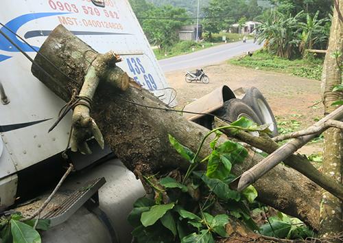 A4-5-6: Cây bàng có đường kính khoảng 50 cm bị container phạt ngang, kéo lê theo hướng xe chạy hơn 10 mét. Ảnh: Quang Hà