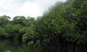 Vườn quốc gia Côn Đảo là khu Ramsar thế giới