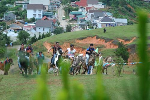 20 chú ngựa tranh tài ở núi Langpiang. Ảnh: Quốc Dũng