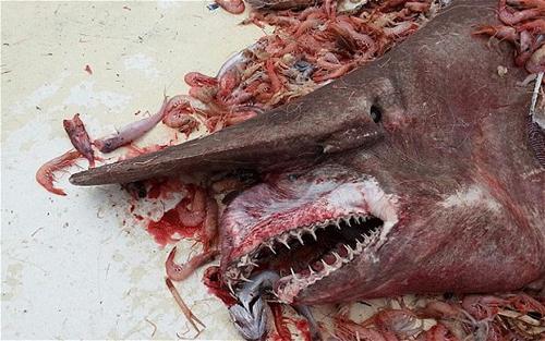sharky-2900568b.jpg