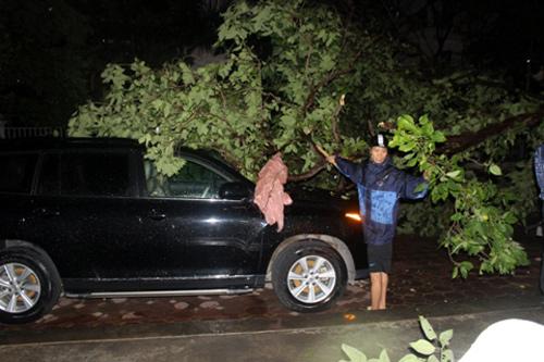 Trên phố Trần Quý Kiên (Cầu Giấy), một cây xanh gãy đổ đã đè lên xe ô tô, khiến xe này hư hỏng nhẹ. Ảnh: VTC