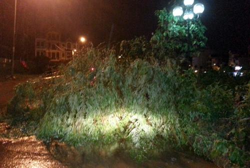 Nhiều cây ở khu đô thị Linh Đàm bị gãy cành và bật gốc. Ảnh: Phương Sơn