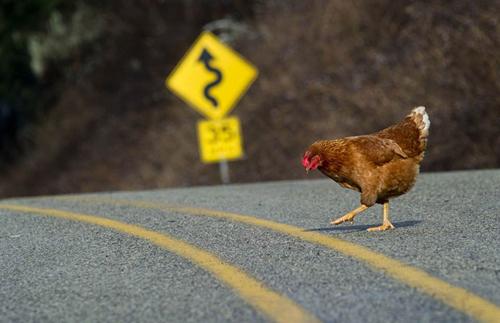 oklpj-chicken-905411-2373-1400753153.jpg
