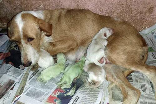 Green-Puppies-3615-1402624718.jpg