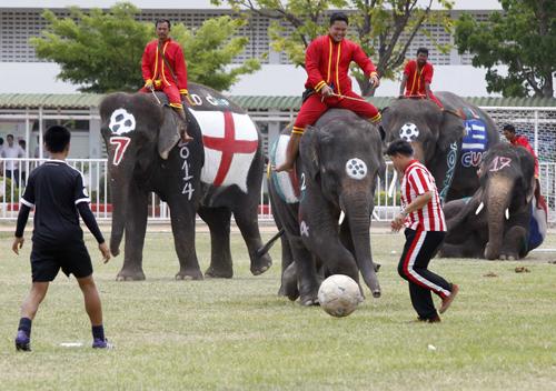 Sinh viên Thái đá bóng với voi ở tỉnhAyutthaya, một hoạt động hưởng ứng World Cup 2014. Ảnh: Reuters