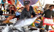 Doanh nghiệp Nhật giúp ngư dân đóng tàu, đấu giá cá ngừ đại dương
