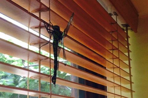 dragonfly-land1-8165-1406688910.jpg