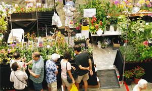 Triển lãm hoa lan và nghệ thuật bonsai Việt Nam tại Mỹ