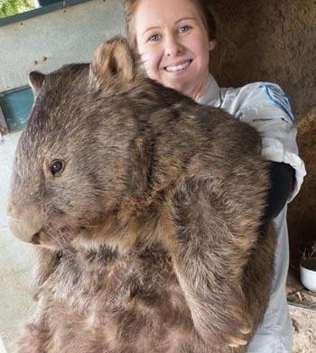 wombat-pic-JPG-2087-1409197925.jpg