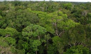 Tháp quan sát khổng lồ ở Amazon