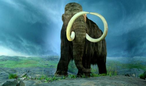 Wooly-Mammoth-RBC-4642-1411790142.jpg