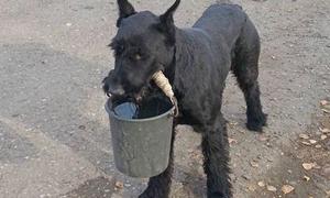 Chó giúp chủ xới đất, bơm nước