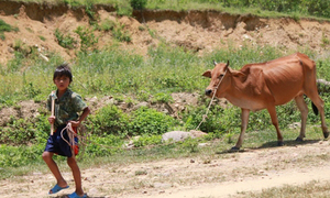 Chiều cao người Việt thấp nhất châu Á