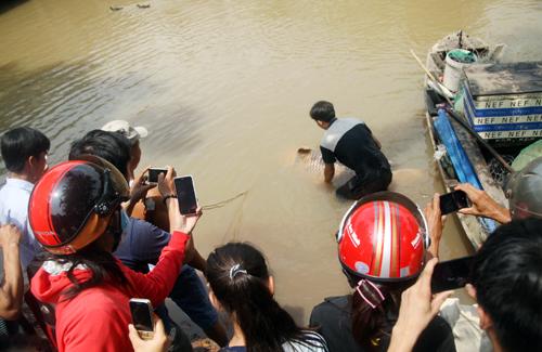 Ngư dân Trần Minh Dung (35 tuổi) cho biết, giữa đêm qua anh thả lưới ở nhánh sông Đồng Nai (phía quận 9, TP HCM). Đến 6h sáng, khi kéo lưới, anh thấy một chú cá lớn giãi giụa rất mạnh, rách cả lưới.
