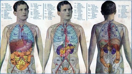 Cơ thể con người có rất nhiều điều bí ẩn. Ảnh: tiffan terry/Flickr