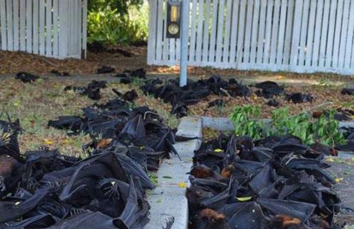 Dead-bats-in-Casino-northern-N-4639-6031