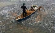 Hàng nghìn con cá vây quanh hai người nông dân