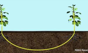 Thực vật 'nói chuyện' với nhau