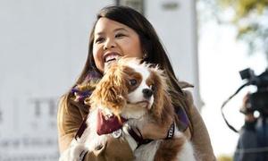 21 ngày cách ly tốn kém của chó cưng y tá gốc Việt