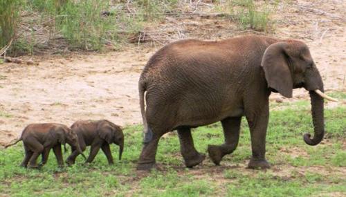 elephants10-size-xxlarge-lette-9502-9364