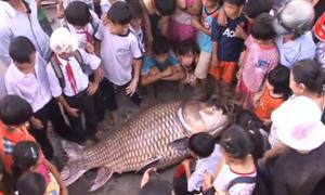 Video bắt cá hô khủng bán 200 triệu hot nhất cộng đồng