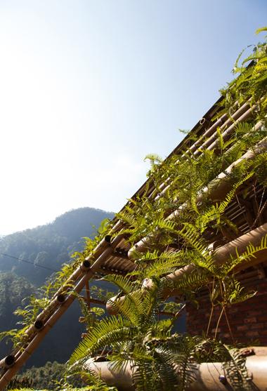 ớp màng thực vật giúp điều tiết vi khí hậu, tăng cường kết cấu chịu lực
