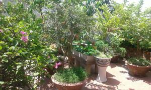 Vườn hoa súng trên sân thượng
