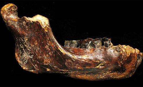fossil-human-2927-1422523634.jpg