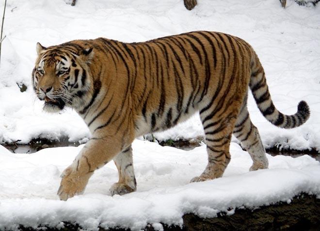 Những động vật có thể biến mất vĩnh viễn từ nay